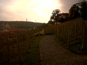 St. Wenceslas vineyard