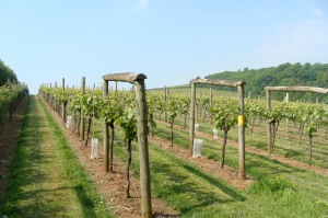 Sharpham estate vineyeards
