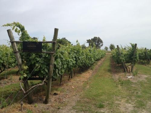 Narbona vines
